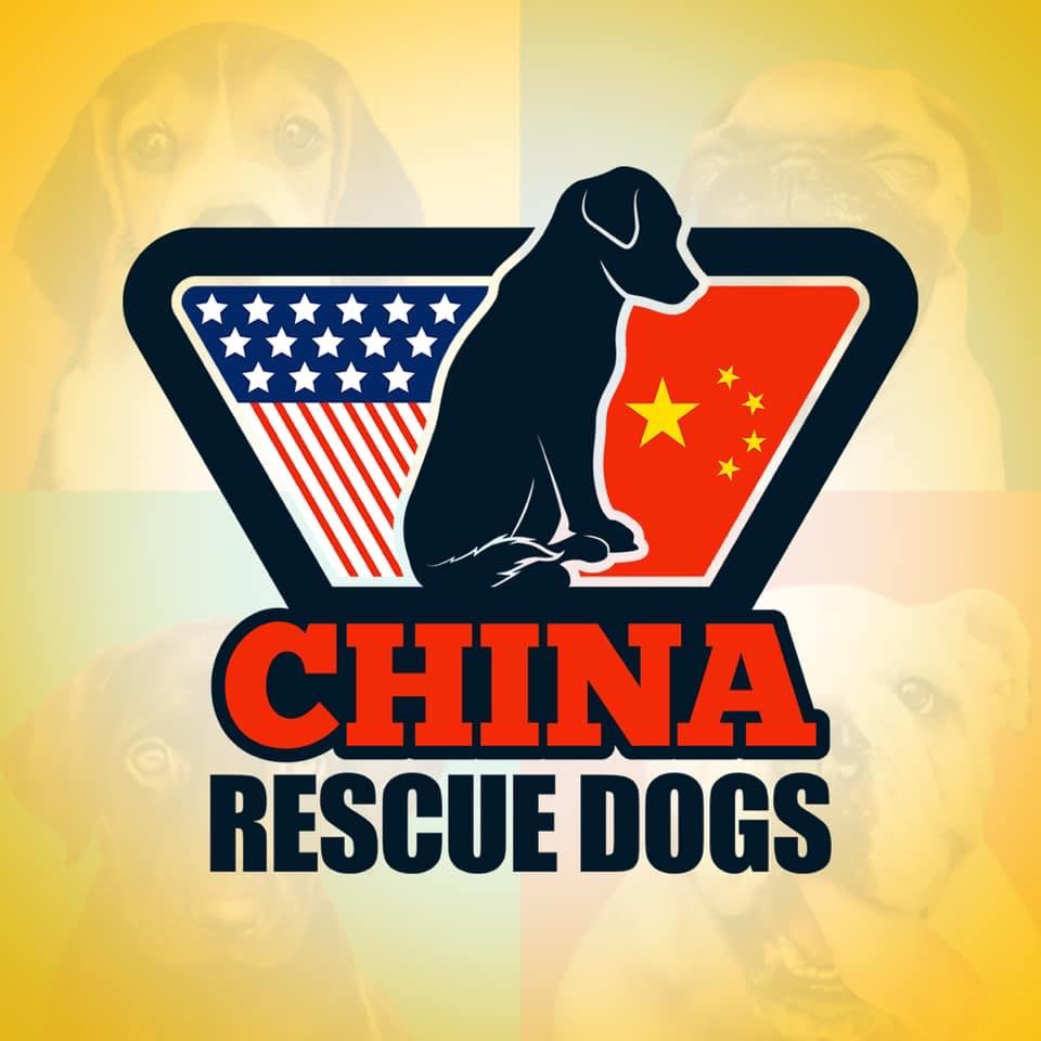 China Rescue Dogs