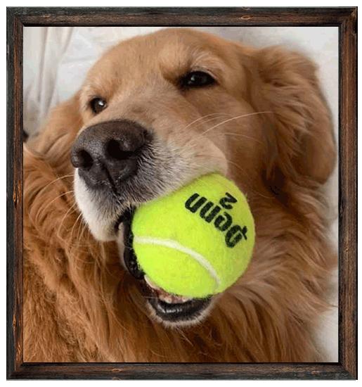 Lisa-Wheeler-Pup