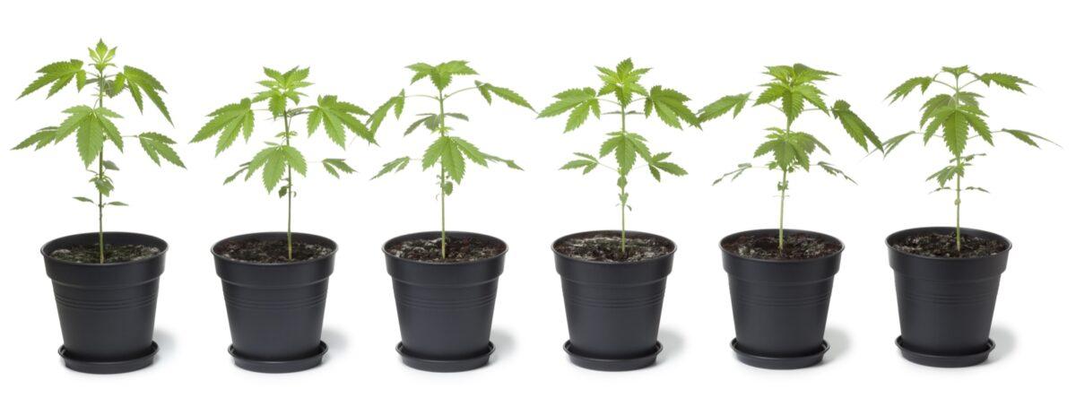 All the Dope on Ohio's Marijuana Ballot Proposal