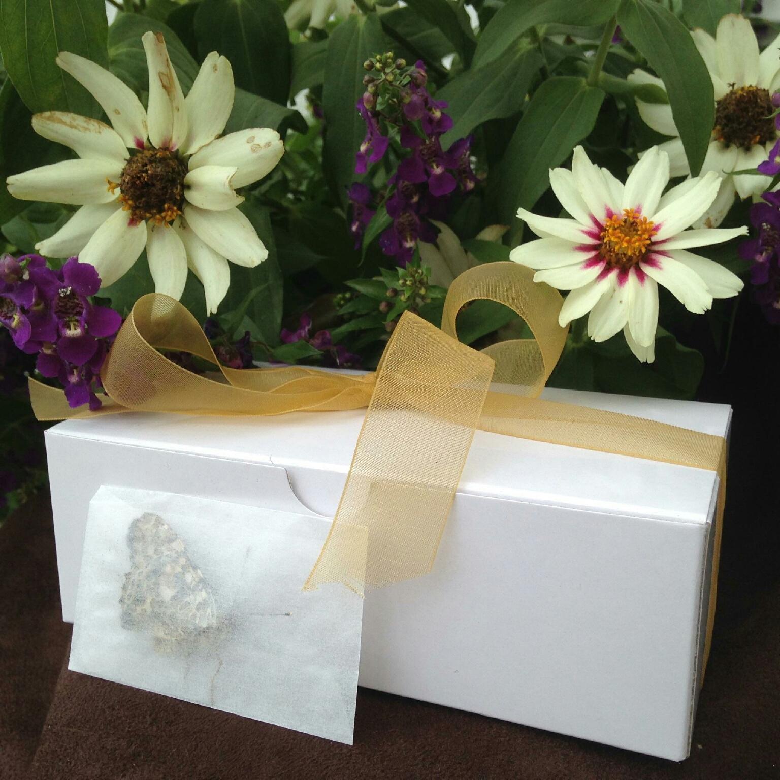 #3 dozen - Painted Ladies in Glassine Envelopes