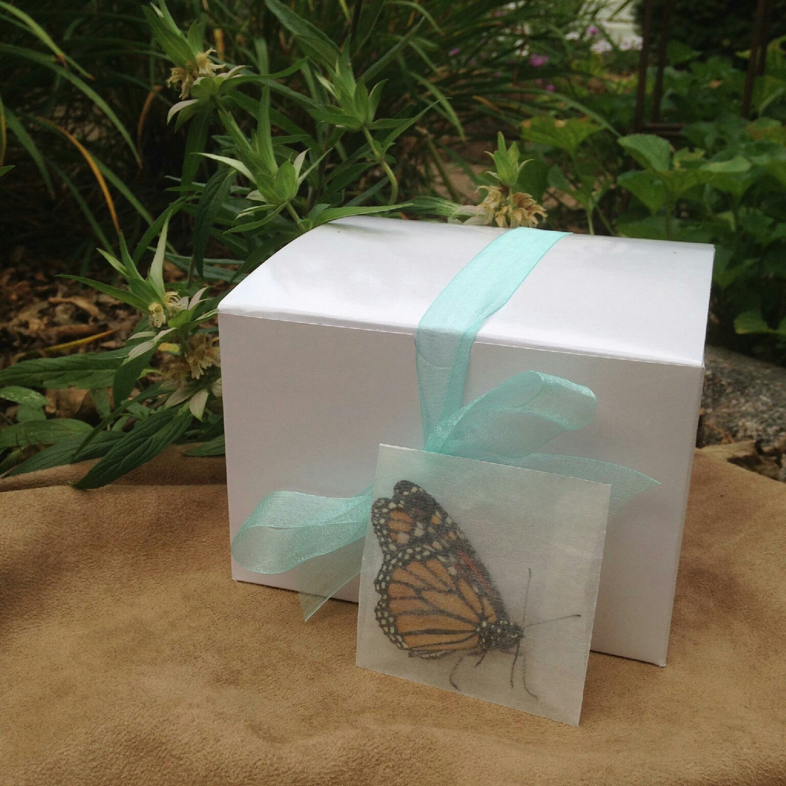 50 Moarcn Butterflies individual Release