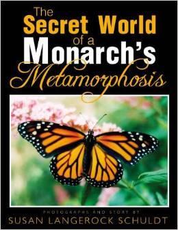 Butterfly Metamorphosis Book
