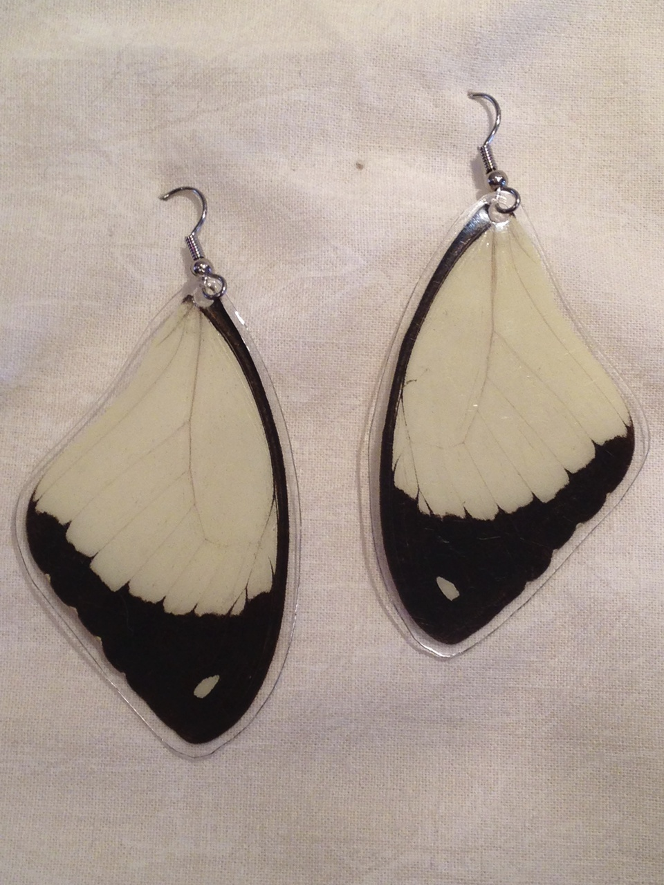 Butterfly Wing Papilio dardanus Earrings