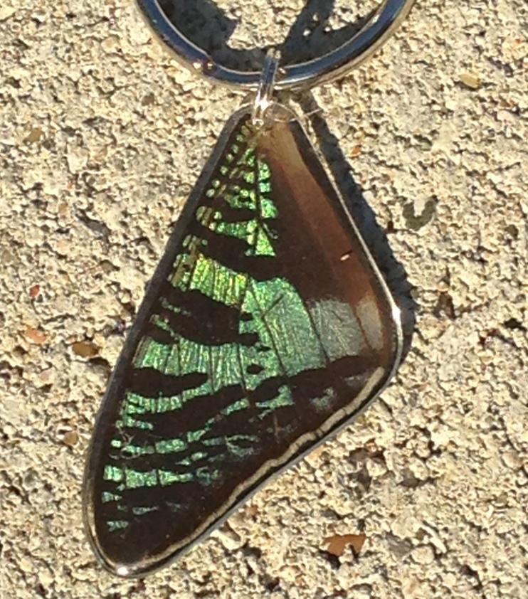 Sunset Moth Wing Key Ring ANA - Sunset KR