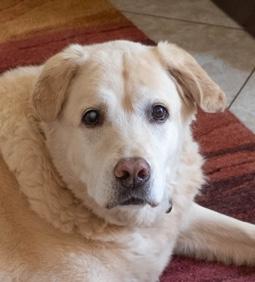 Dog Barkley