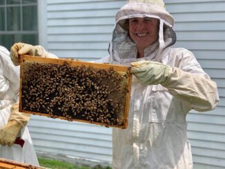 Beekeeping - New England Learning Vacations