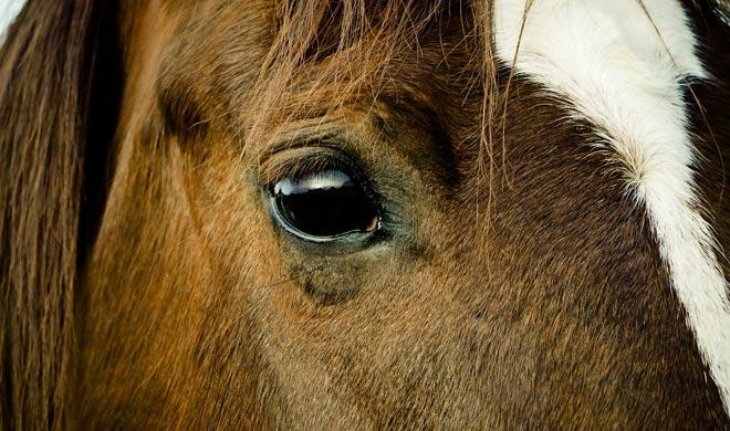 Pikeville Horse Trails & Tours