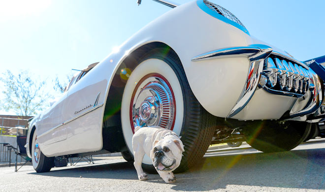 A dog in front of a car.