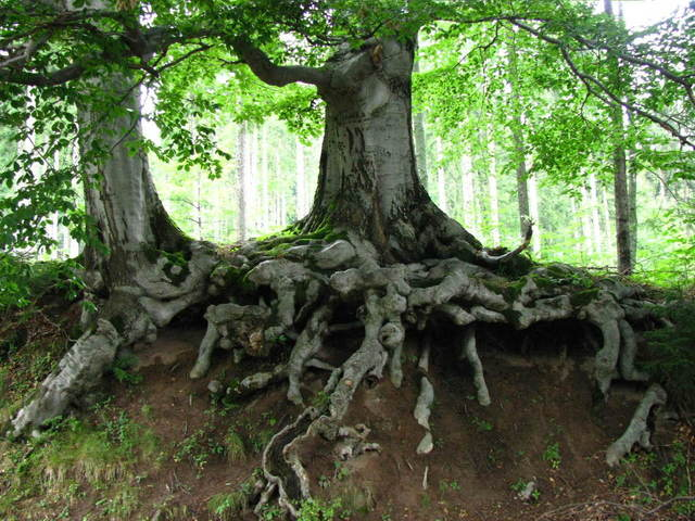 roots-1335194-640x480
