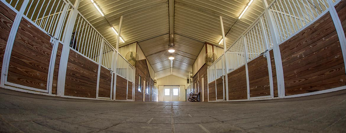 HumphreyQH-theranch-stables