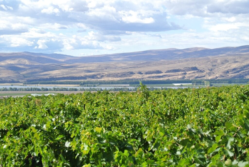 Beautiful Wahluke Slope Vineyard