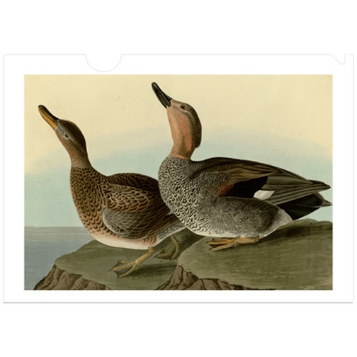 A letter-sized folder with Audubon's Gladwell duck. Audubon painted the Gadwall Duck (Anas strepera) with amazing detail. It is another example of the beauty and influence of this artist and his seminal work, The Birds of America. a perfect gift for Adubon and natural history fans.