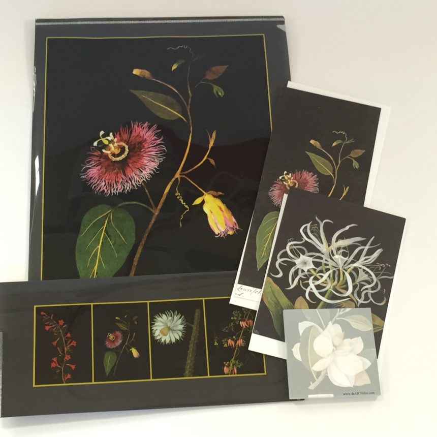 Two Folders (Letter-sized Portfolio Folder and Envelope-sized Folder), 2 note cards with envelopes and 1 sticky note pad. Images are from Mrs. Mary Delaney's beautiful paper collages with water color. a stunning collection of motifs and designs.
