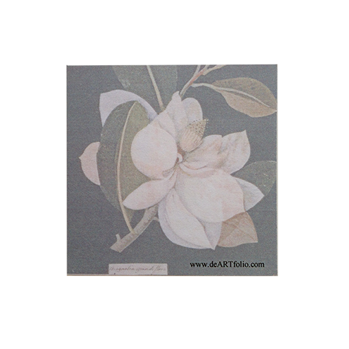 a lovely beauty in everyday concept to use this sticky pad w the image of Magnolia Grandiflora, a collage of colored papers with body color and watercolor created by Mrs. Mary Delany in 1776. Lovely image on your desk or as a lovely gift for someone dear.