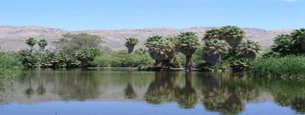 Enjoy Agua Caliente Park in Tucson