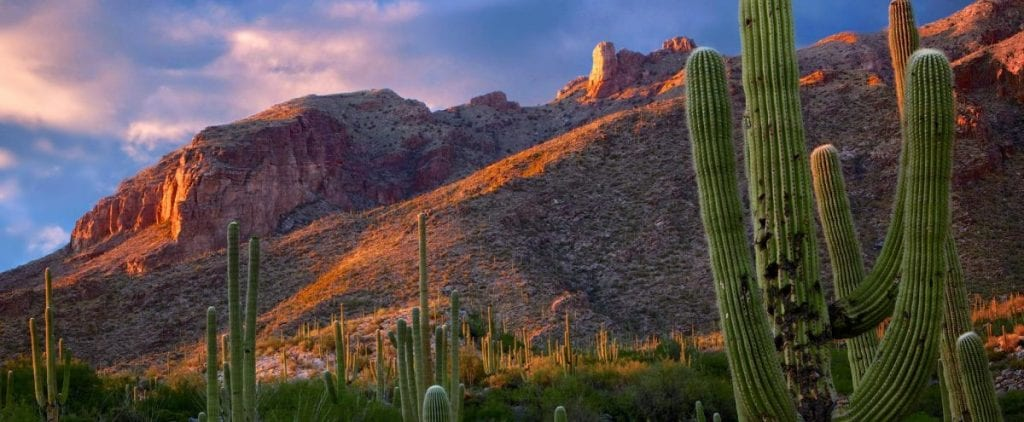 Catalina Foothills Real Estate with Tony Ray