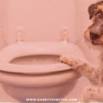 potty Training blog