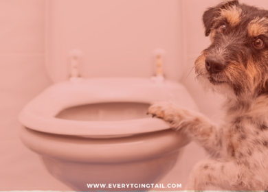 How to Potty Train Your Dog? The Best Tips for New Pet-Parents.