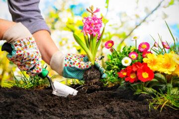 Avoiding Back Injury While Gardening