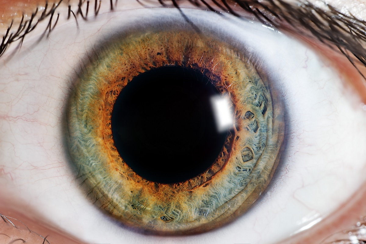 Why It's Important to Get Your Eyes Checked Even If Your Vision Is Fine