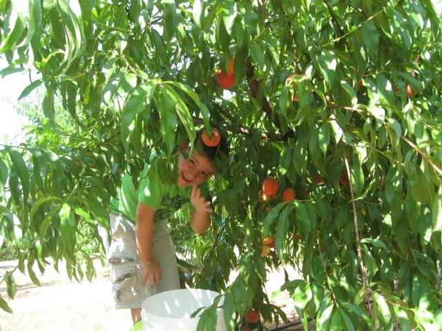 Suzanne's Fruit Farm