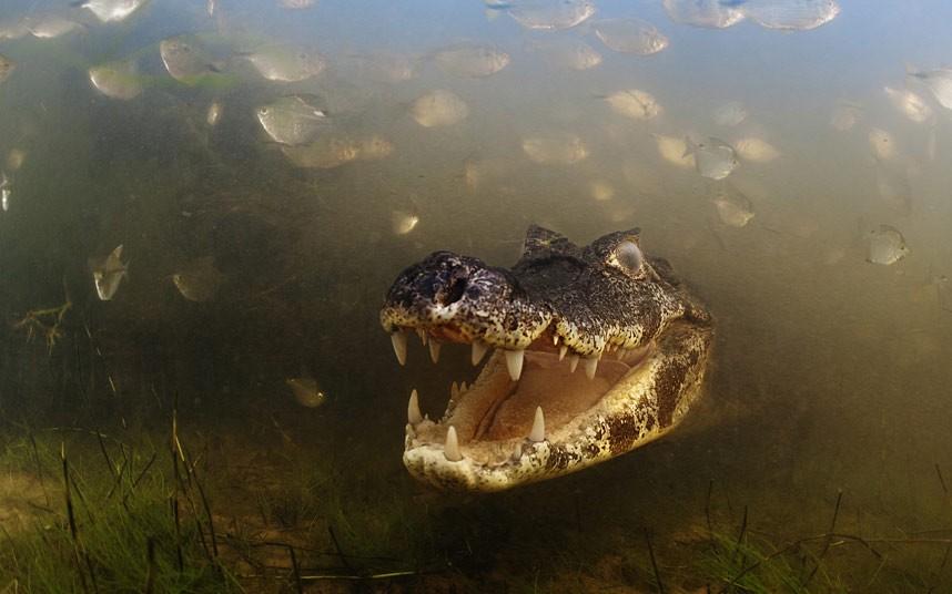 Luciano Candisani/Veolia Wildlife Photographer of the Year 2012
