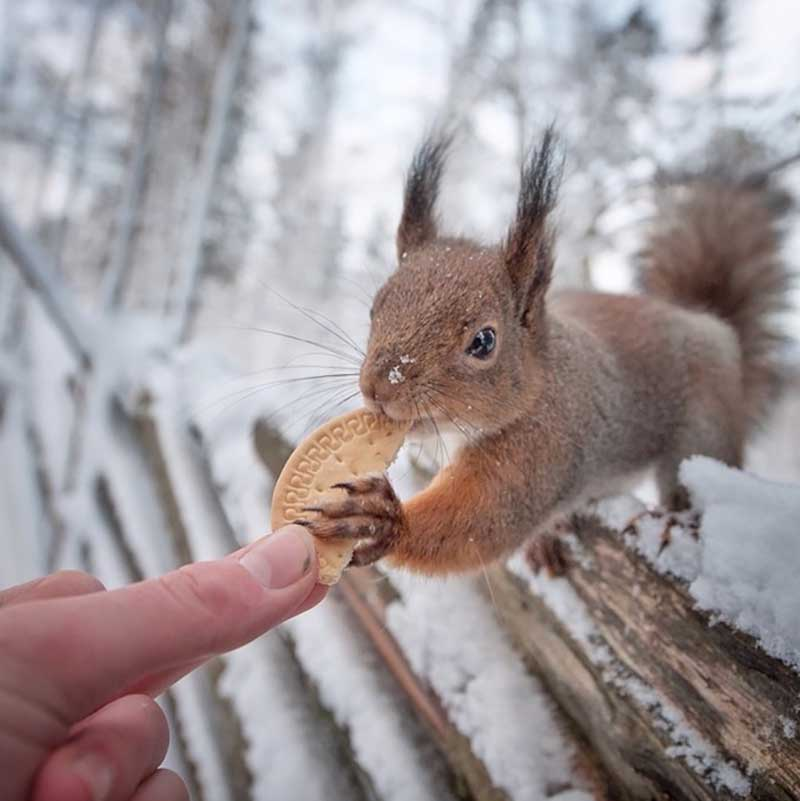 iPhotoChannel_animaisselvagens_alimentando_KonstaPunkka11