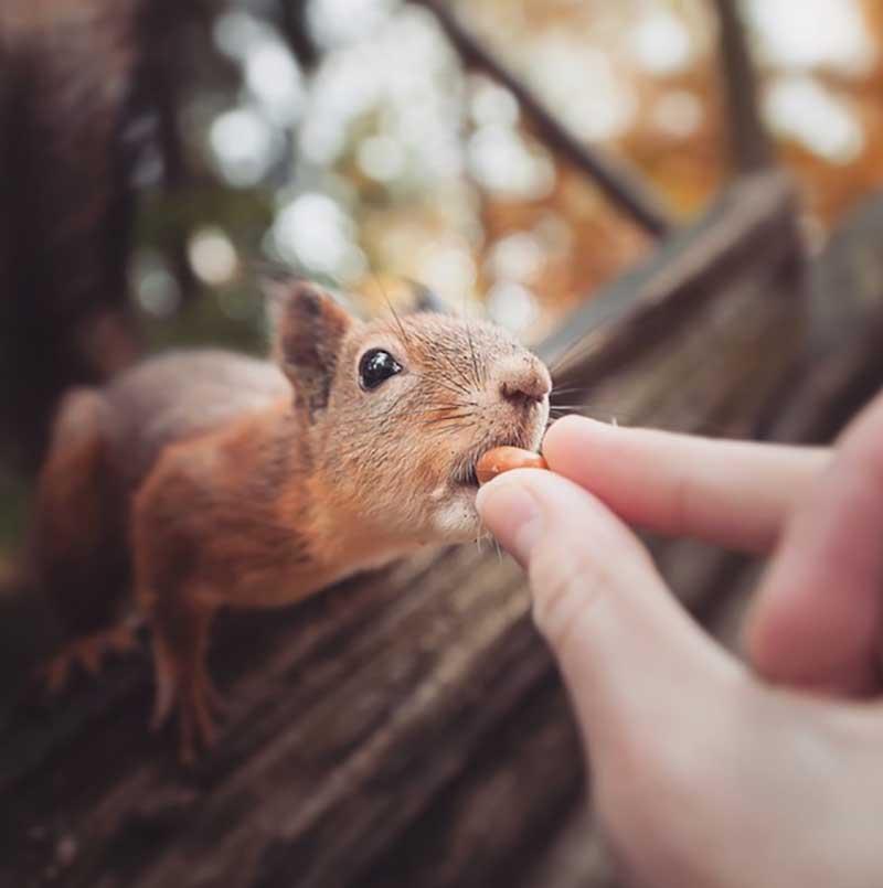 iPhotoChannel_animaisselvagens_alimentando_KonstaPunkka2