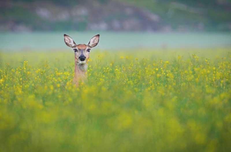 iPhotoChannel_animaisselvagens_alimentando_KonstaPunkka4