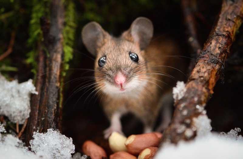 iPhotoChannel_animaisselvagens_alimentando_KonstaPunkka5