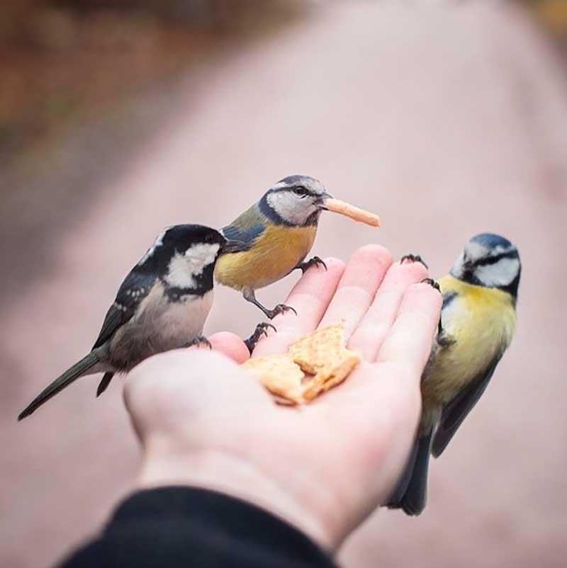 iPhotoChannel_animaisselvagens_alimentando_KonstaPunkka7