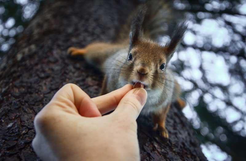 iPhotoChannel_animaisselvagens_alimentando_KonstaPunkka8