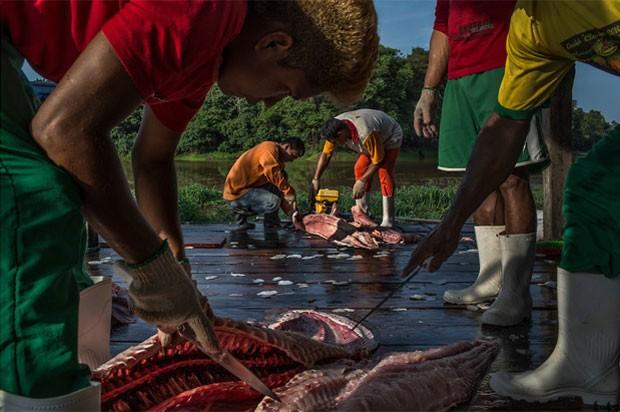 Amazonenses separam carne de pirarucus recém-pescados em Maraã, no oeste do estado.   Foto: Mauricio Lima/The New York Times/POY Latam 2015