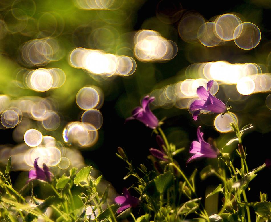 Imagem criada com a lente Meyer Optik Trioplan f/2.8 | Foto: Divulgação