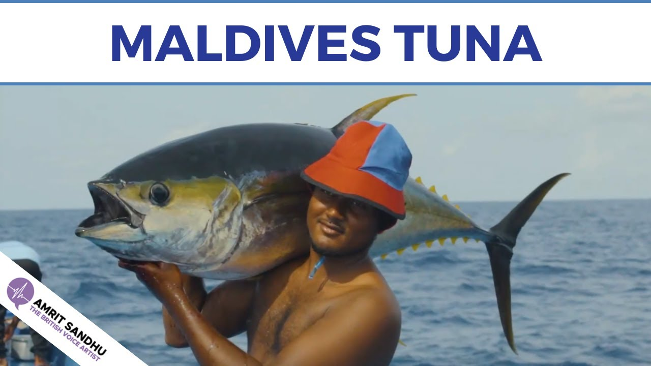 The British Voice Artist - Maldives Tuna