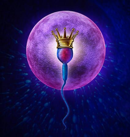 sperm crown