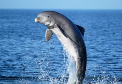 Discovery Saturday Dives into Dolphin Behavior