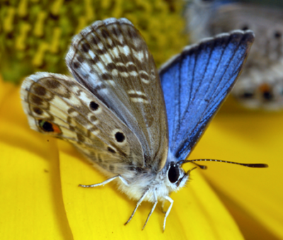 Endangered Butterflies to be Released in Key Largo