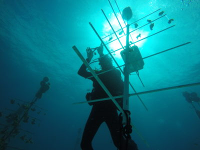 FWC Officers Help Farm Underwater Coral