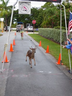 Race to Save What's Endangered: Florida Keys Wildlife Society Seeks Registrants for Annual Run with Deer 5K Run/Walk:
