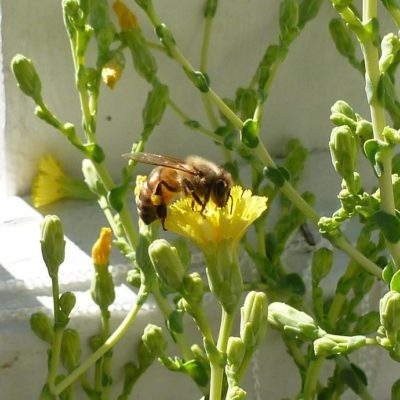 """April 15th Speaker at KWTF&BG: """"GMOs, Neonics and Pollinators: Separating Fact from Fear."""""""