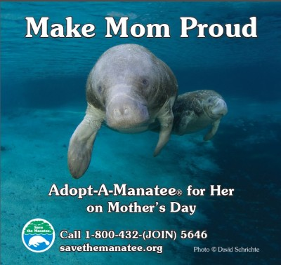 Adopt a Manatee for Mother's Day