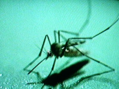 DENGUE FEVER: EIGHT MORE CASES CONFIRMED