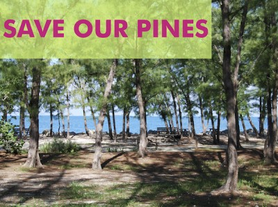Save Our Pines, March 15
