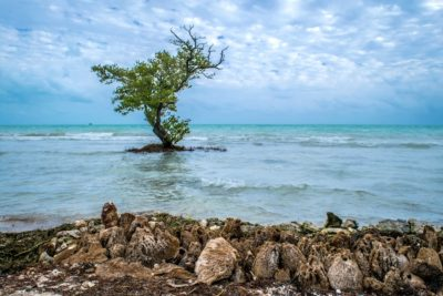 Florida Keys National Wildlife RefugesPhotoClub Meeting, December 12th
