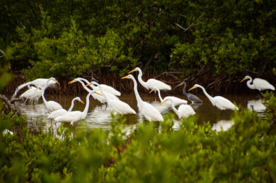 Florida Keys National Wildlife Refuge's Photography Contest, Submissions Due March 1, 2018