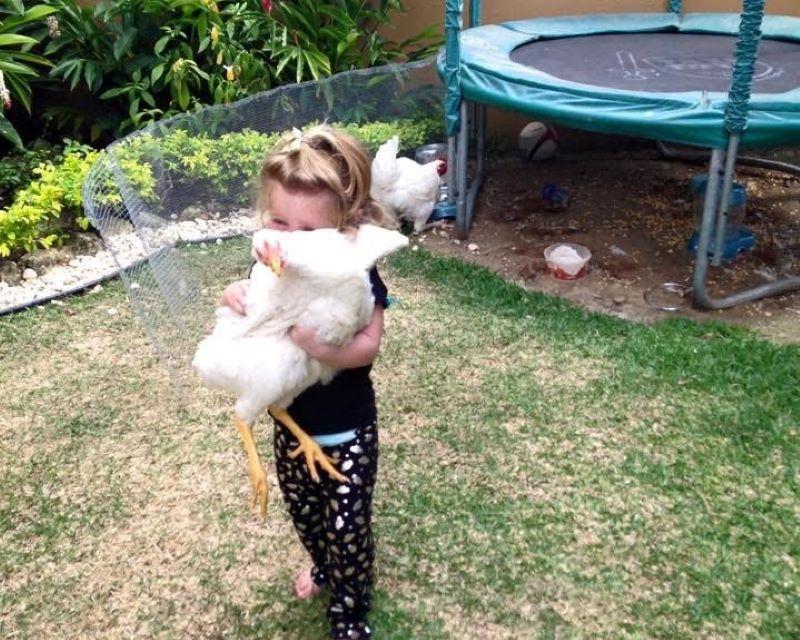 Animais de estimação: legislação e questões práticas