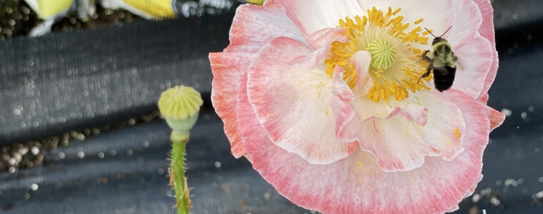 Magical blossoms everywhere at Kimberly's Greenhouse in Tazewell, Virginia