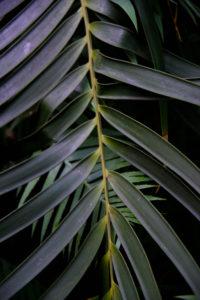 Tropical Leaf Missouri Botanical Garden