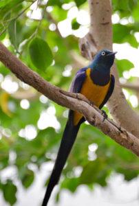 Bird St. Louis Missouri Zoo
